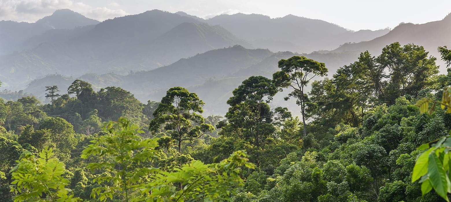 Toppen af regnskoven bjerge