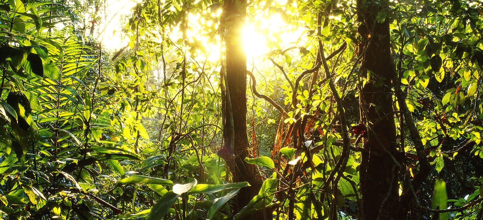 sol regnskov cool earth