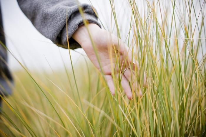 Hønder der rører ved langt græs.
